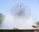 Dogs in the Dandelion fountain